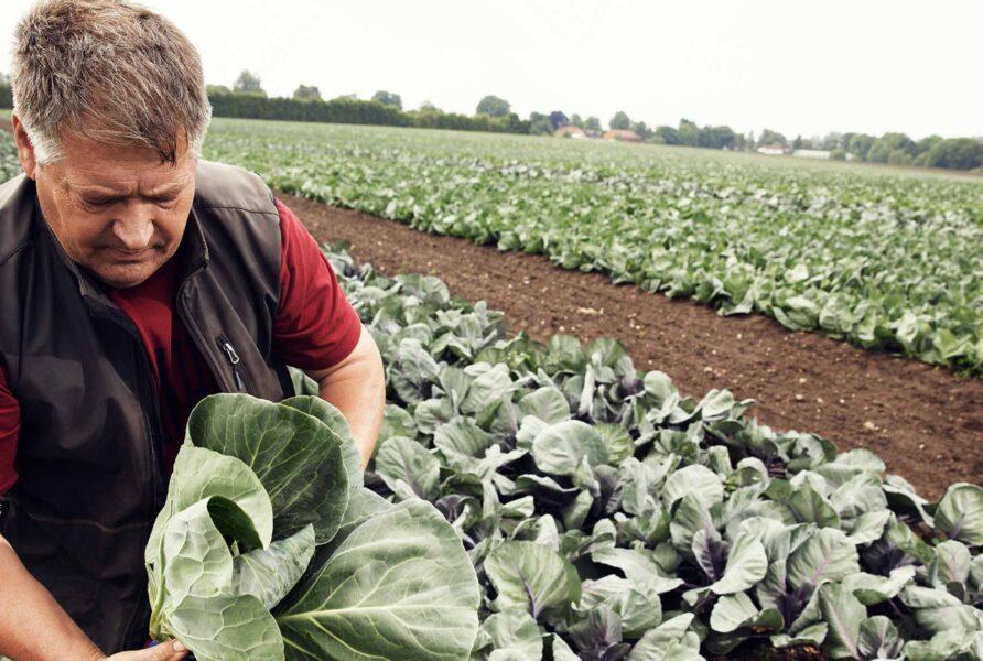 Landmand på mark